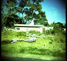 House by PetroniusArbit