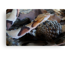 Slither and Slide Canvas Print