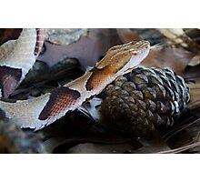 Slither and Slide Photographic Print