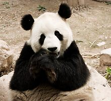 Hungry panda by Thivan