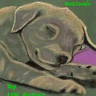 Puppy, Dog,Canine e-book by Dawn B Davies-McIninch