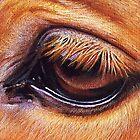 Horse eye by Elena Kolotusha