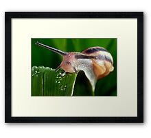 The Magical Kingdom of Snails Framed Print