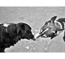 Collie Kisses Photographic Print