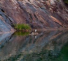 """""""Rock Pool Reflections"""" by Heather Thorning"""