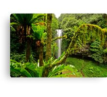 Dorrigo Mountain...15-6-11. Canvas Print