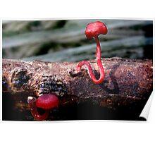 Fungi Season 1115 Poster