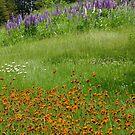 Wildflowers By The Roadside by Tracy Wazny