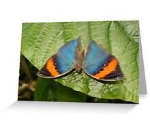 Indian Dead Leaf Butterfly in Garden Greeting Card