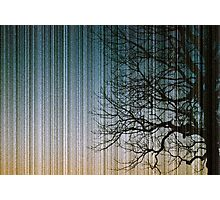 Streaks in the Sky Photographic Print