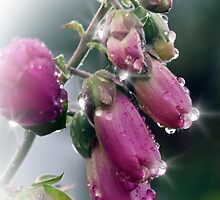 Rain Drops On Wild Foxgloves  by Aj Finan