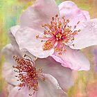 Rose Essence by Leslie Nicole