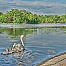 Hyde Park - Swan by Aase