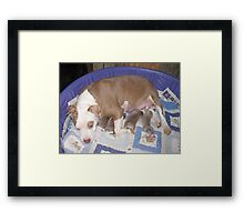 Rose And Her New Babies Framed Print