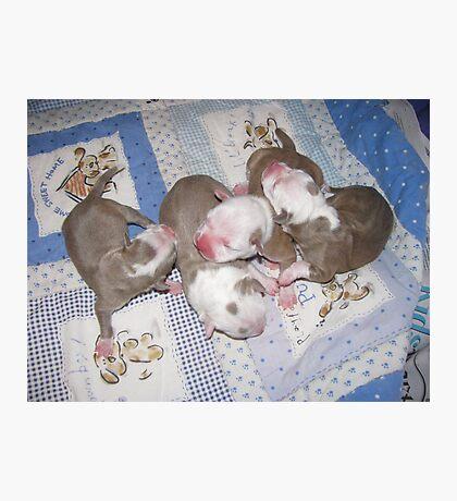 Precious Newborns Photographic Print