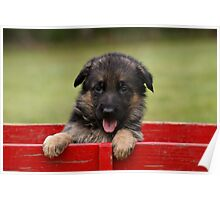 Puppy in a Wagon Poster