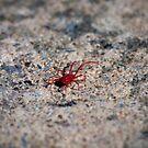 Red Spider Mite by Melanie Simmonds