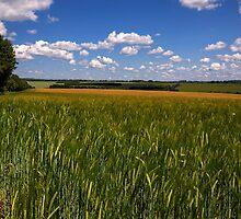 Barley near Winchester, UK by NeilAlderney