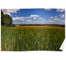 Barley near Winchester, UK Poster