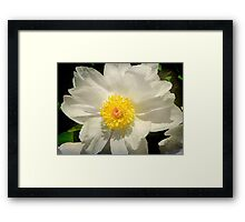Purity © Framed Print