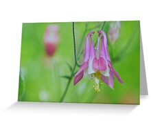 Pretty Pink Columbine Flower Greeting Card