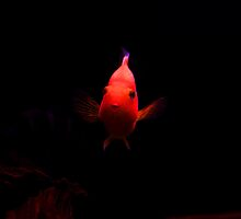 Mr Parrot Fish - The fish pose by gnanes