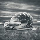 She shell by Simon Siwak