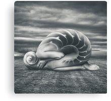 She shell Canvas Print
