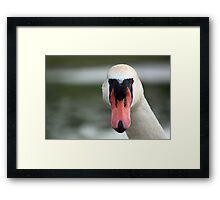 Head-on Swan Framed Print