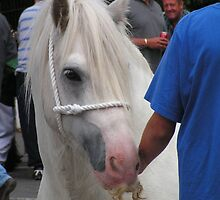 The Gypsy Horse by Kat Simmons