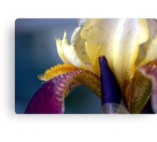 An Iris with a Mohawk.......... Canvas Print