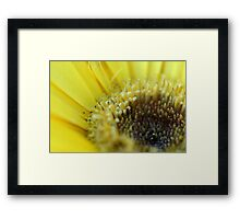 Up Close and in your Face.................. Framed Print