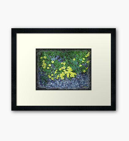 Rock Plants Framed Print