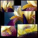 Iris in Command............... by Larry Llewellyn