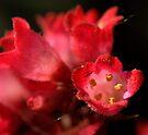 Red Bells....... by Larry Llewellyn