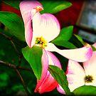 Pink Flowers by lizwaltzes