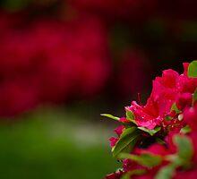 dew flowers by joeymeuser