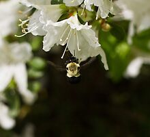 bumble bee by joeymeuser