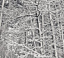 Winter Lacework by Andy Whitfield