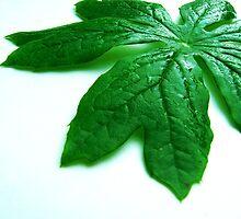 Mayapple Leaf  by Marcia Rubin