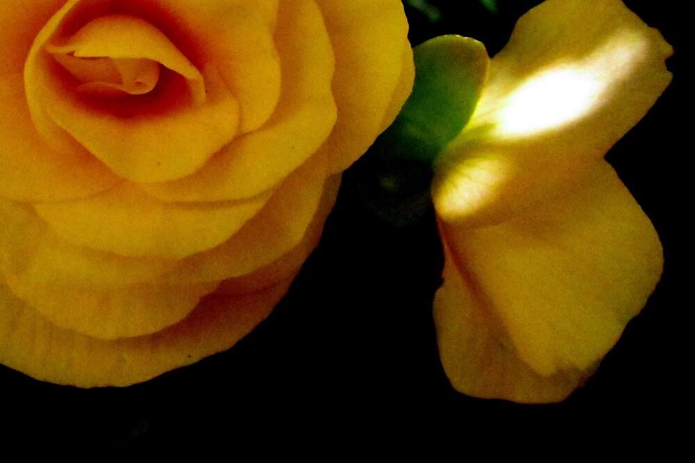 Begonia Beauty by Debbie Robbins