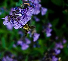 Bumble Bee Days by Mark Jackson
