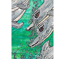 Friendly Dolphin Pod Photographic Print