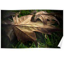 Fallen Autumn Leaf - Queens Park Toowoomba Poster