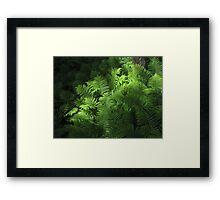 Forest Ferns 2 Framed Print