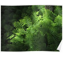 Forest Ferns 2 Poster
