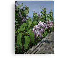 Lilac and Fence Canvas Print