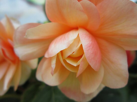 Pale Orange Floral by marybedy