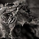 death | life by Kenny Gulley Jr.