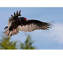 Vulture Descent Photographic Print